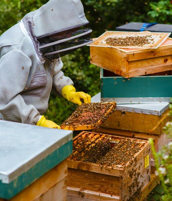 Bee selling