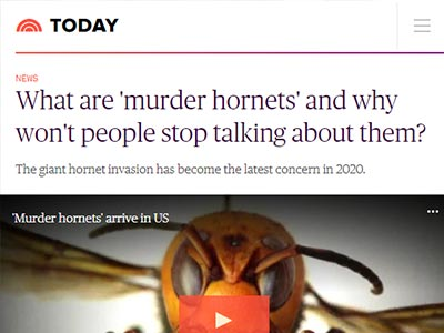 What are 'murder hornets' and why won't people stop talking about them?