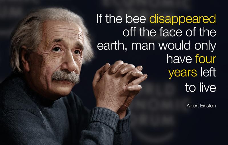 Albert Einstein quote on bees